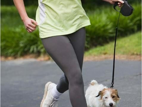 Dog's behaviour `indicator` of elderly owner's health