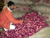 Over 100 vans to sell cheap onions from Monday: Dikshit