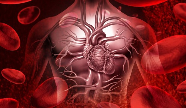 Why heart rate decreases with age