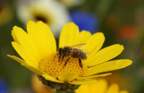 Diesel exhaust affects honeybees` ability to forage for flowers