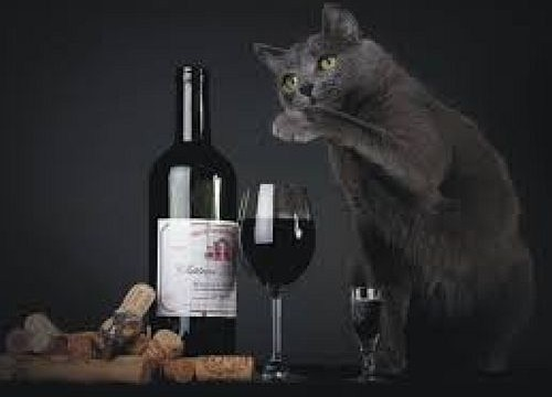 Now, wine for cats!