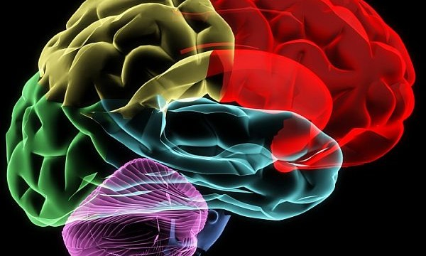 How your brain helps you make up your mind