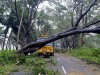 Cyclone causes heavy crop damage, six deaths in Andhra