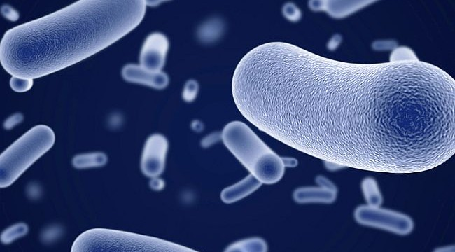 Gut microbes up risk of colorectal cancer