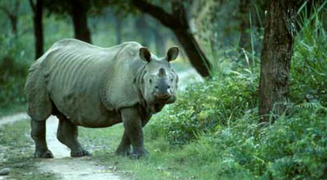 Assam's Kaziranga National Park gives warm welcome to tourists