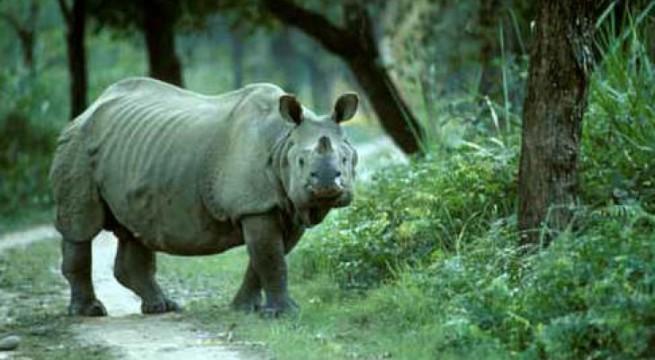 Assam's Kaziranga National Park gives warm welcome to tourists