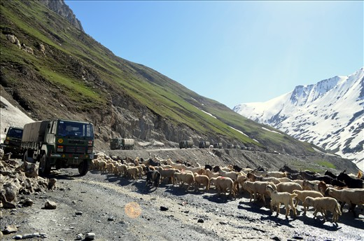 Learning to fight the world in Kargil