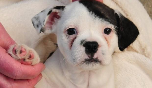 Meet the UK dog who looks just like Hitler