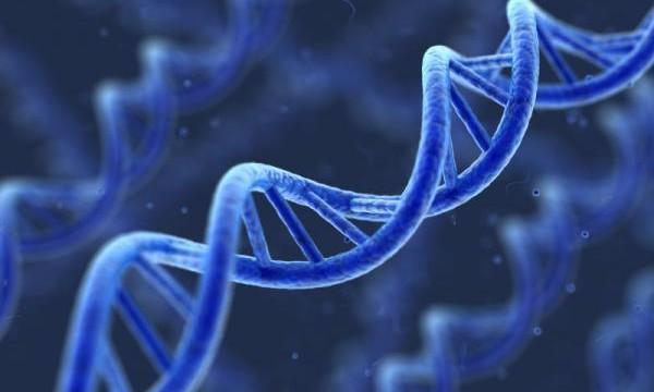 Protein coding `junk genes` key to understanding cancer