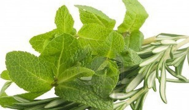 Rosemary and spearmint extract may help stave off Alzheimer's disease