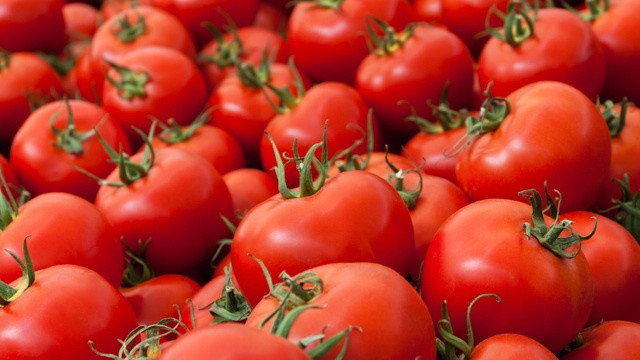 Genetically engineered tomatoes could help improve cholesterol levels