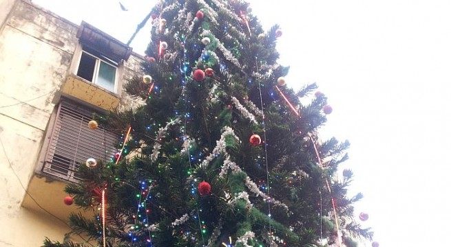 A Christmas Tree that is India's tallest - and growing