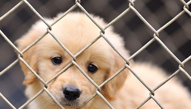 New York has its first matrimonial pet-custody case