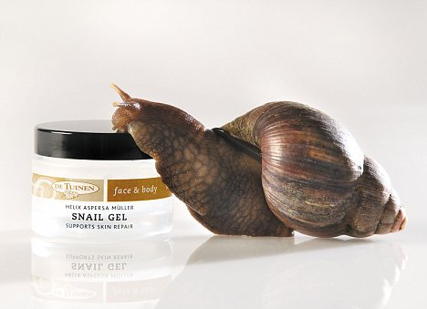 Snail gel now the popular way to banish wrinkles