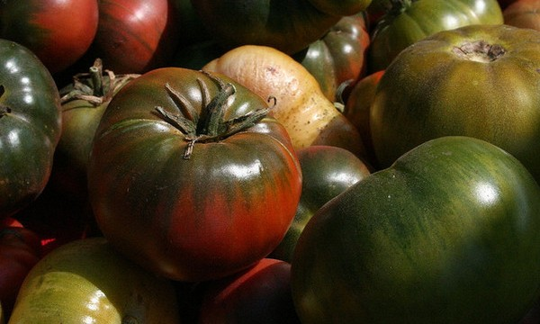 How tweaking `hybrid vigor` gene generates higher tomato crop yields