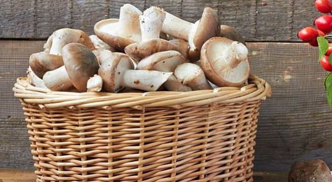 Now, bask in mushrooms to get Vitamin D