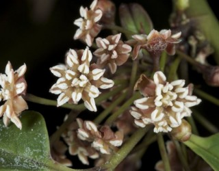 New gene study sheds light on origin of more than 300,000 flowering plants