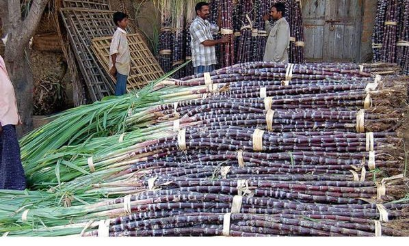 Pawar announces Rs. 7,200-crore bailout package for sugar industry