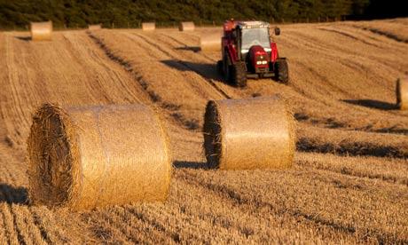 Farmers make hay bales using tractor