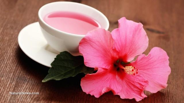 Hibiscus-Tea-Flower-Cup