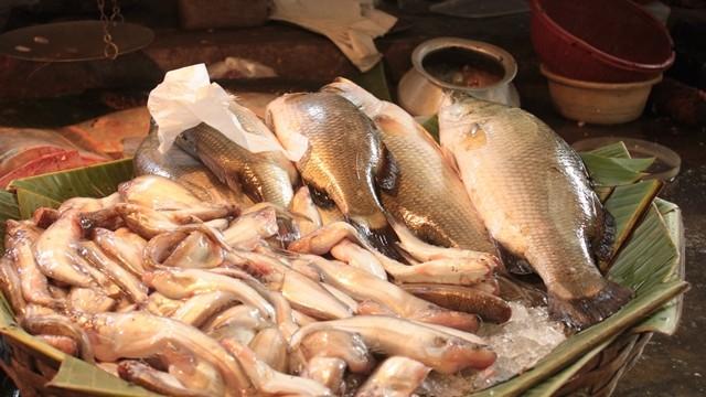 kolkata-fish-market-5