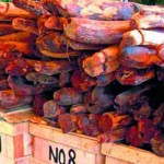2 cops suspended for taking bribes from red sanders smugglers in Andhra Pradesh