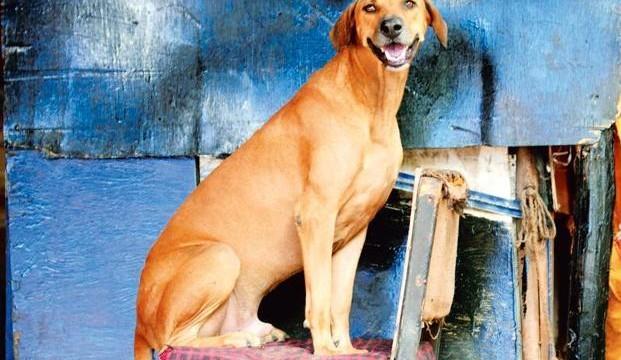 dog1--621x414