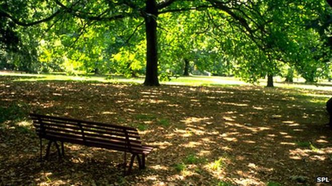 bench_in_woodland-spl
